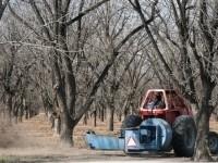 Pecan farmers at work