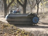 Pecan farmers in harvest mode