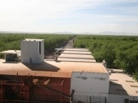 trucks for wholesale pecans from pecan supplier