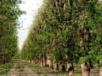 Pecan tree orchard road