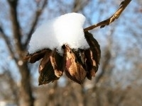Wholesale pecans in winter