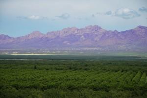 Image overlooking Stahmanns a pecan grower